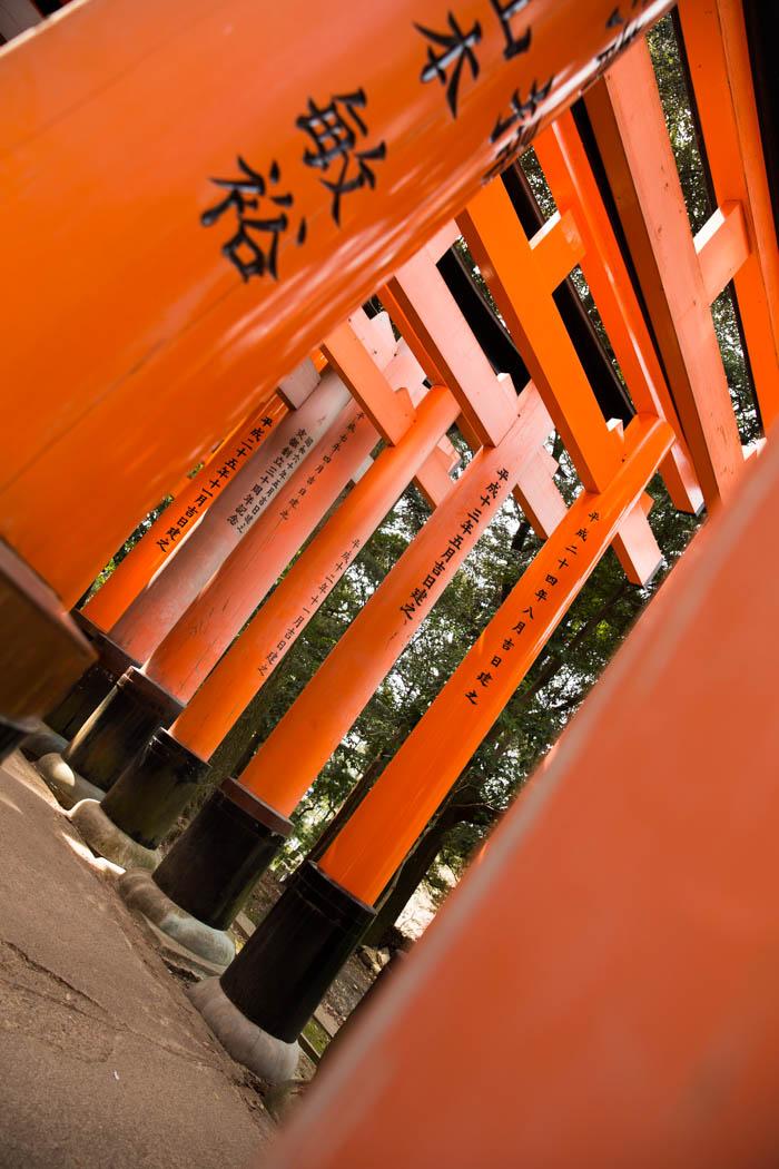 sakura_kyoto_12042014-7V0B8321