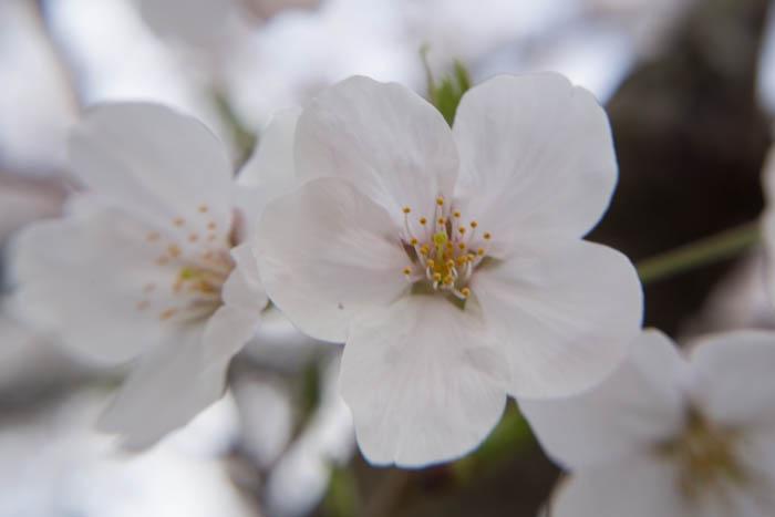 sakura_selection_article02042014-7V0B4109