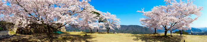 sakura_takeda_14042014-P1030104