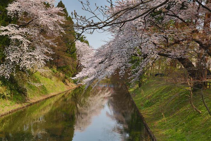 Sakura_article_hirosaki1--selection_exposure_27042014_7V0B3072