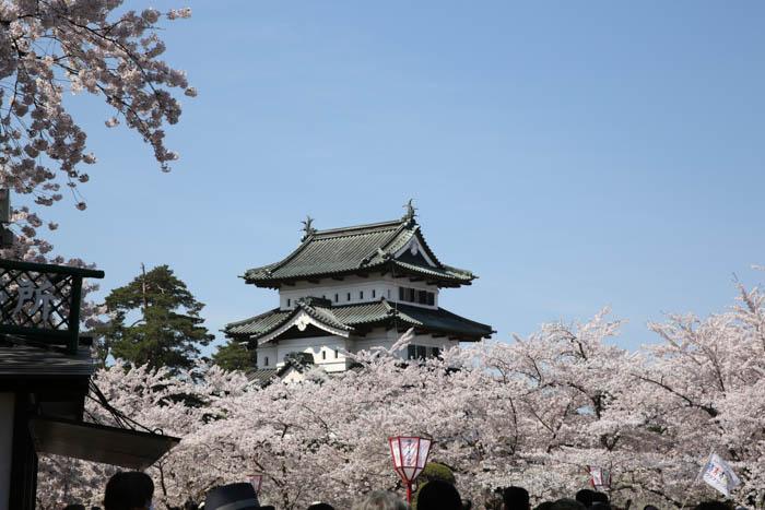 Sakura_article_hirosaki2_29042014_7V0B4921