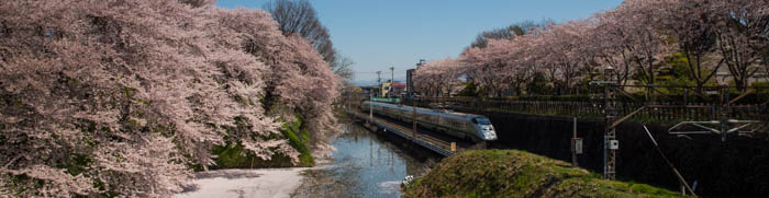Sakura_article_yamagata2--selection_exposure_25042014_7V0B2948