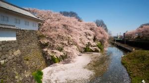 Sakura_article_yamagata2--selection_exposure_25042014_7V0B2956