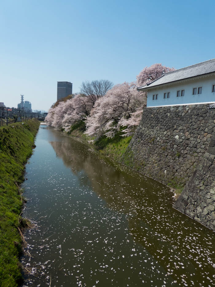 Sakura_article_yamagata2_25042014_P1040536