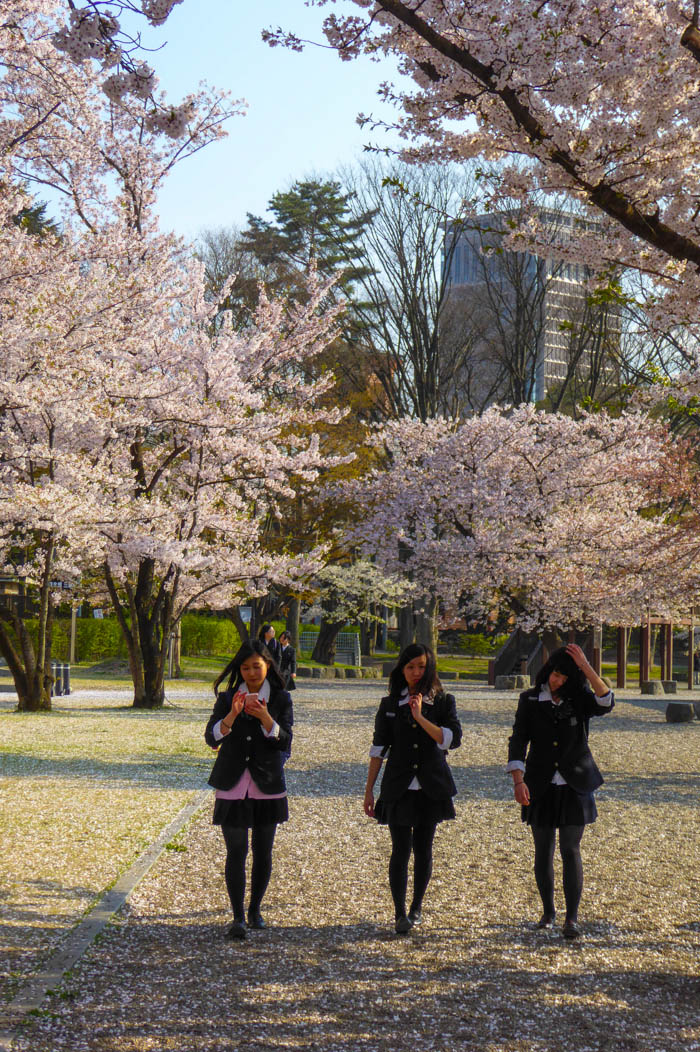 Sakura_selection_article_kaminoyama--selection_exposure_24042014_P1040486