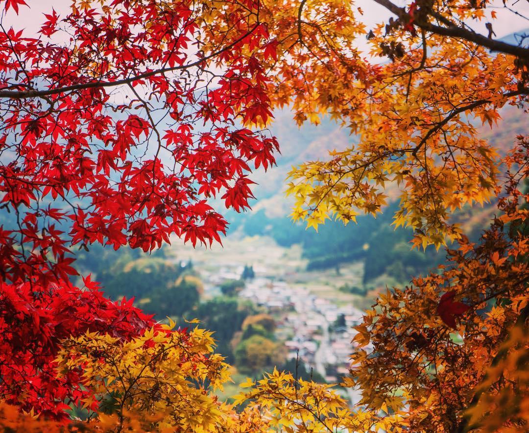 Japon_voyage_17032019-07b9db35d555c629af0046f93f599c61-
