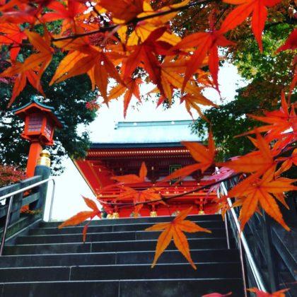 Japon_voyage_17032019-50d7507164998def08acce3dfb6ccbd9-