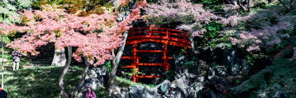 Japon_voyage_05052019-59_Japon_voyage_29112015-DSC05731-10endroits__article_100choses__koishikawa_kurakoen__tokyo-