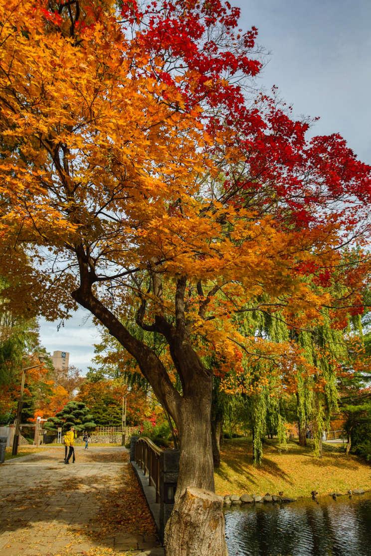 japaninamug, nakajima park, twitop_12_5_157V0B8277